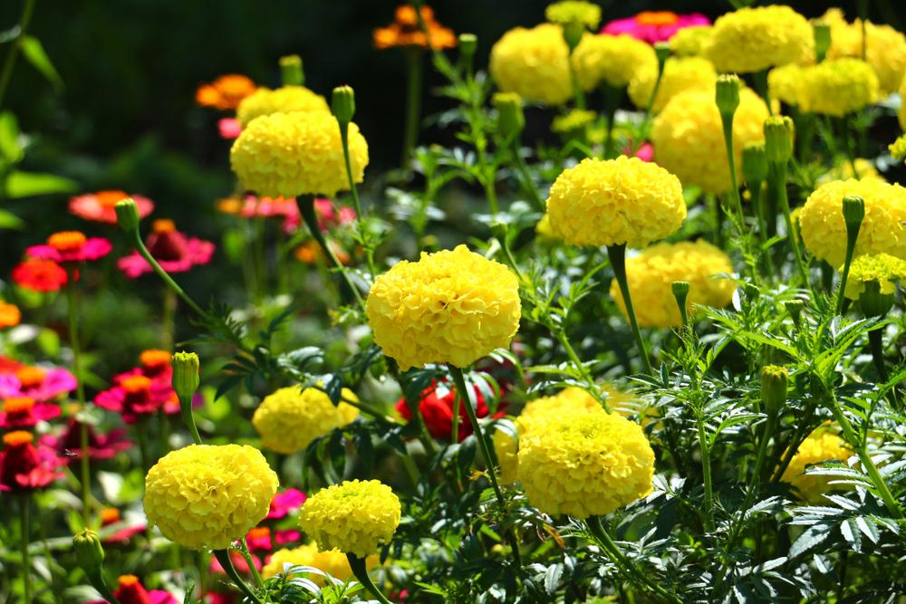 blomsterreol til haven